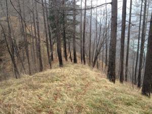 Sentiero che sale dalla Val Falcina